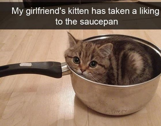 Cat - My girlfriend's kitten has taken a liking to the saucepan
