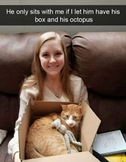 Cat - He only sits with me if I let him have his box and his octopus