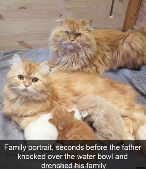 Cat - Family portrait, seconds before the father knocked over the water bowl and drenched his family