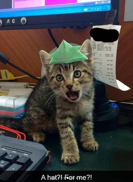 Cat - 5лс о A hat?! For me?!