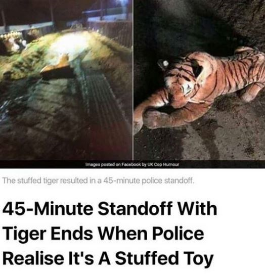 Bengal tiger - images posted on Facebook by UK Cop Humour The stuffed tiger resulted in a 45-minute police standoff. 45-Minute Standoff With Tiger Ends When Police Realise It's A Stuffed Toy