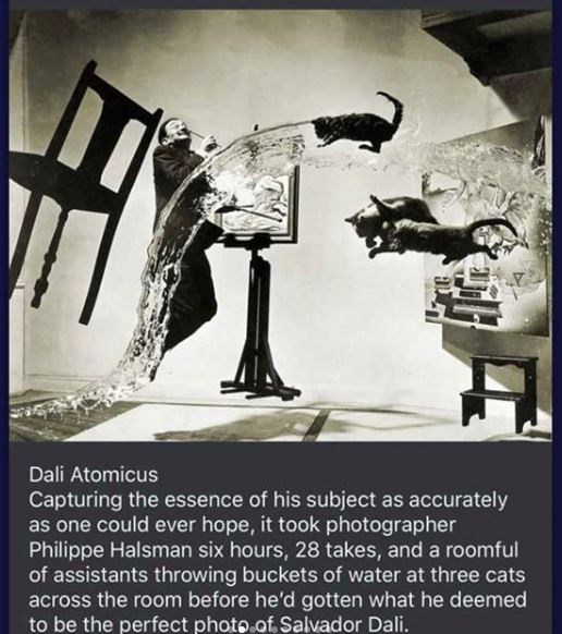 Poster - Dali Atomicus Capturing the essence of his subject as accurately as one could ever hope, it took photographer Philippe Halsman six hours, 28 takes, and a roomful of assistants throwing buckets of water at three cats across the room before he'd gotten what he deemed to be the perfect photo.of. Salvador Dali.