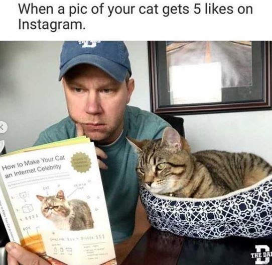 Cat - When a pic of your cat gets 5 likes on Instagram. How to Make Your Cat an Internet Celebrity THE DA MaetrC