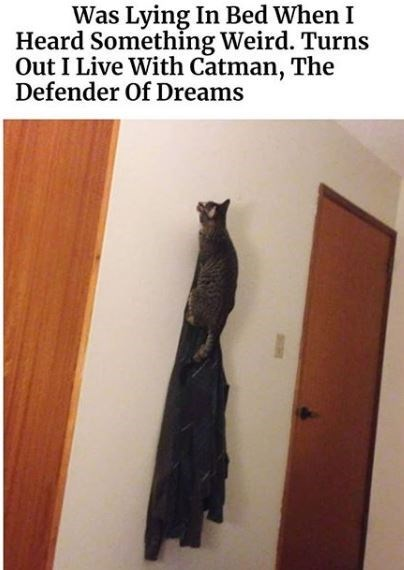 Cat - Was Lying In Bed When I Heard Somethỉng Weird. Turns Out I Live With Catman, The Defender Of Dreams
