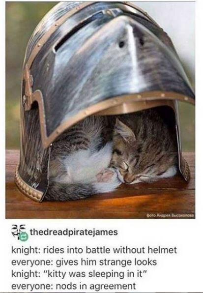 "Helmet - bono Anpen conono thedreadpiratejames knight: rides into battle without helmet everyone: gives him strange looks knight: ""kitty was sleeping in it"" everyone: nods in agreement"