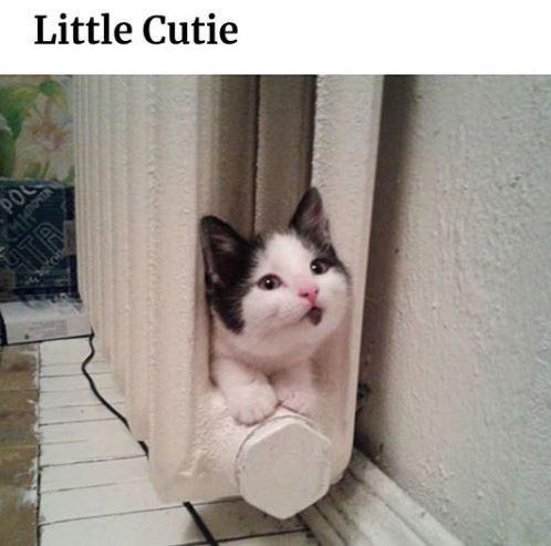 Cat - Little Cutie POC MIN ATB