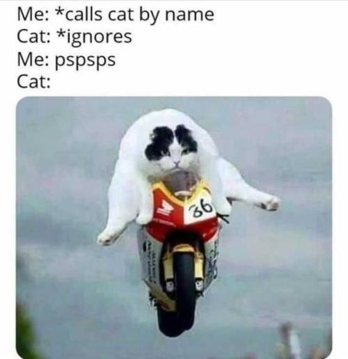 Canidae - Me: *calls cat by name Cat: *ignores Me: pspsps Cat: 36