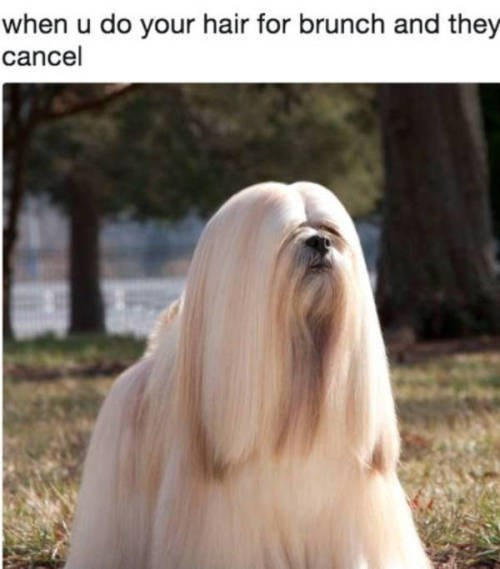Dog - when u do your hair for brunch and they cancel