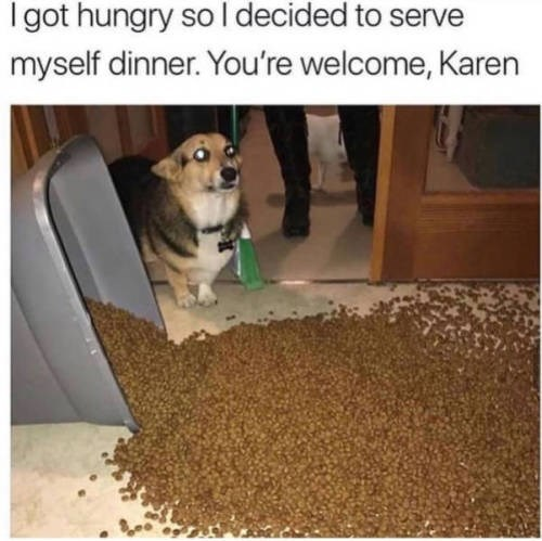 Pet food - I got hungry so l decided to serve myself dinner. You're welcome, Karen