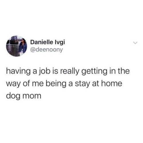 Text - Danielle Ivgi @deenoony having a job is really getting in the way of me being a stay at home dog mom