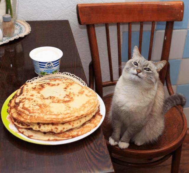 Cat - CHETAMA
