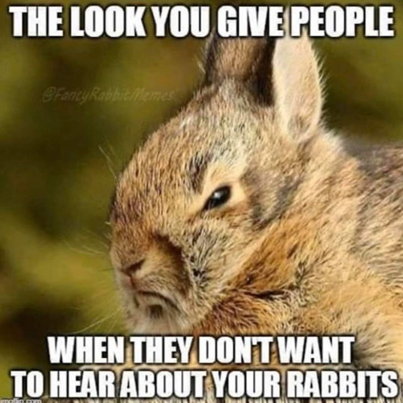 Vertebrate - THE LOOK YOU GIVE PEOPLE FantyRabbit Memes WHEN THEY DONT WANT TO HEAR ABOUT YOUR RABBITS matip.com