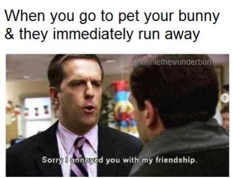 Text - When you go to pet your bunny & they immediately run away winniethewunderbun Sorry I annoyed you with my friendship.