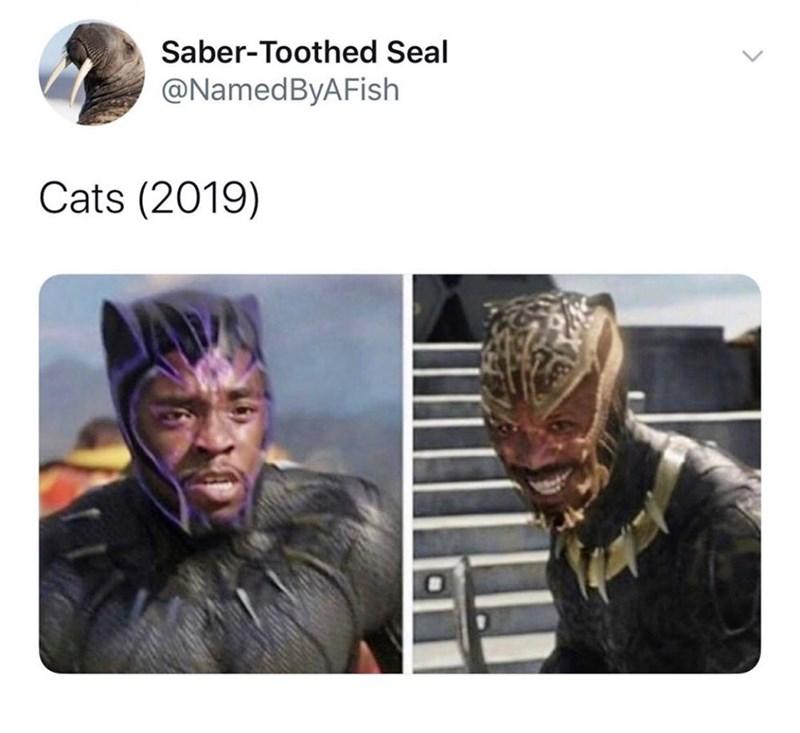 Human - Saber-Toothed Seal @NamedByAFish Cats (2019)