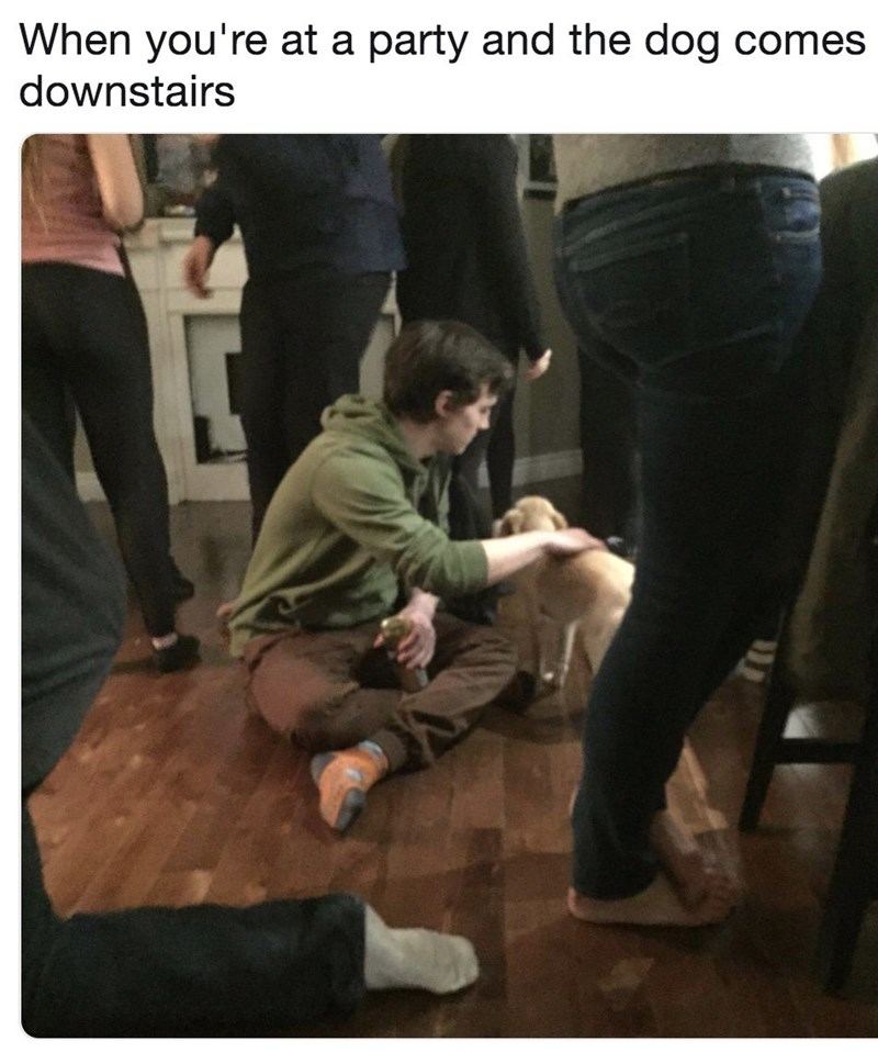 Photo caption - When you're at a party and the dog comes downstairs