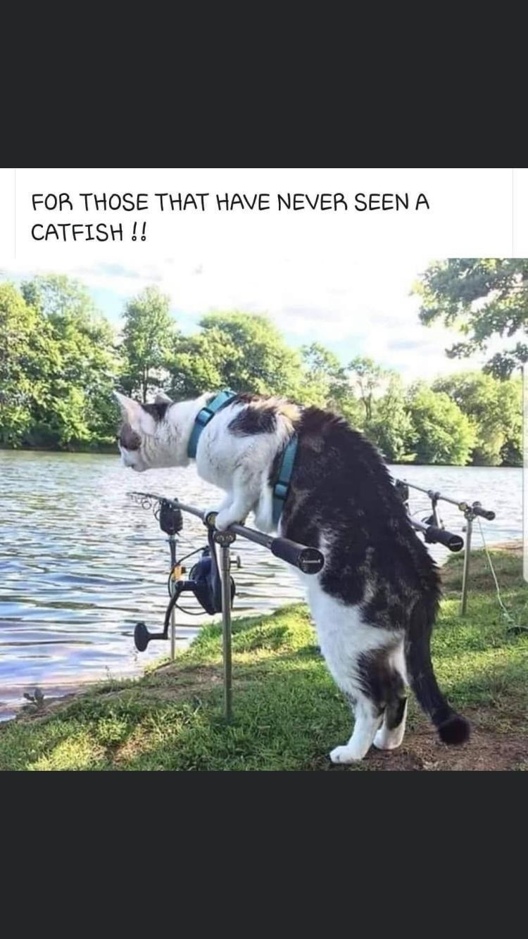 Photo caption - FOR THOSE THAT HAVE NEVER SEEN A CATFISH !!