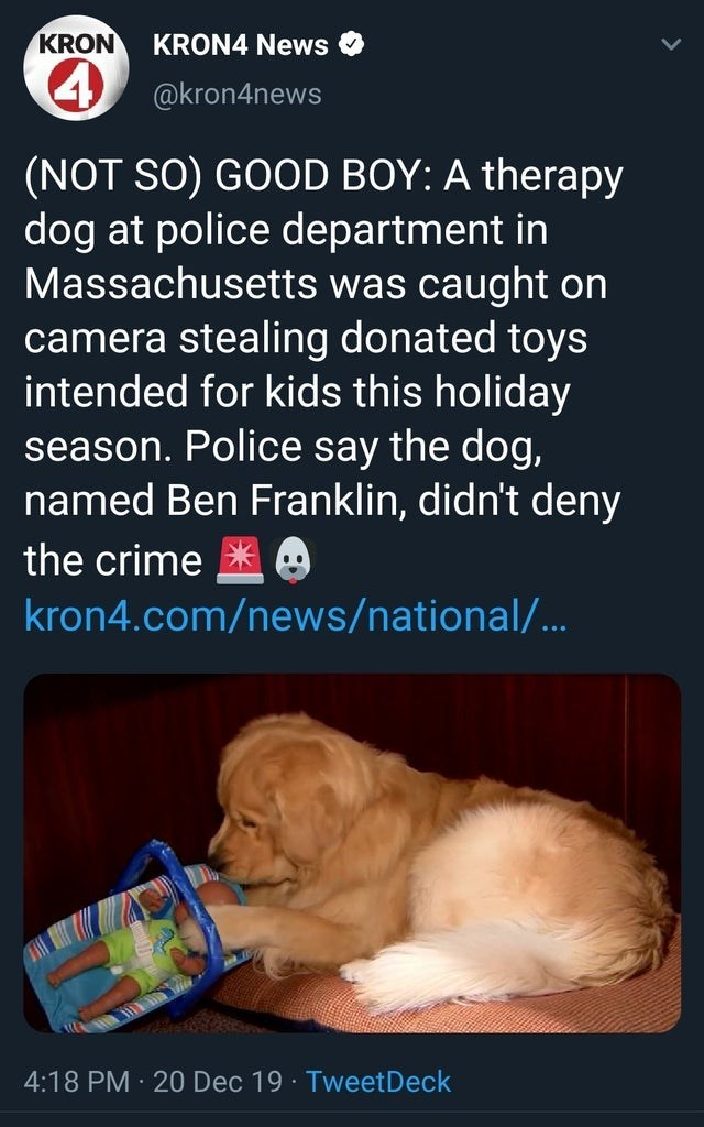 Puppy - KRON KRON4 News 4 @kron4news (NOT SO) GOOD BOY: A therapy dog at police department in Massachusetts was caught on camera stealing donated toys intended for kids this holiday season. Police say the dog, named Ben Franklin, didn't deny the crime * kron4.com/news/national/... 4:18 PM · 20 Dec 19 · TweetDeck