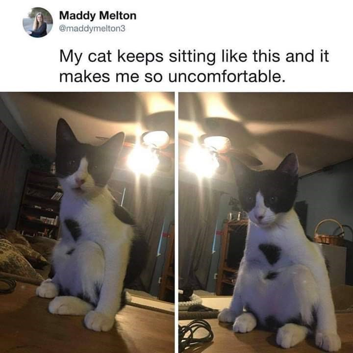 Cat - Maddy Melton @maddymelton3 My cat keeps sitting like this and it makes me so uncomfortable.