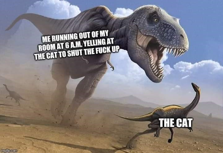 Dinosaur - ME RUNNING OUT OF MY ROOM AT 6 AM. YELLING AT THE CAT TO SHUT THE FUCK UP THE CAT ingipcom