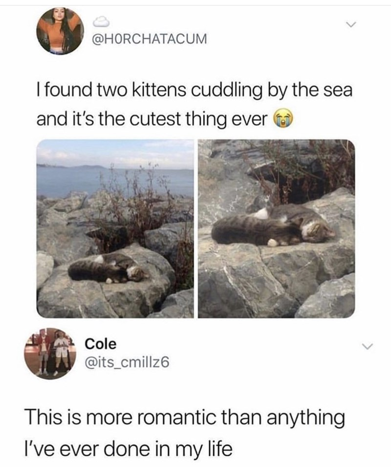 Text - @HORCHATACUM I found two kittens cuddling by the sea and it's the cutest thing ever Cole @its_cmillz6 This is more romantic than anything I've ever done in my life
