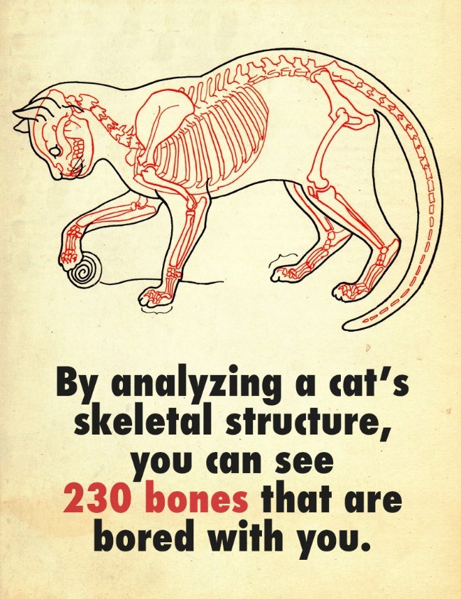 illustration of a cat's skeleton: by analyzing a cat's skeletal structure, you can see 230 bones that are bored whit you