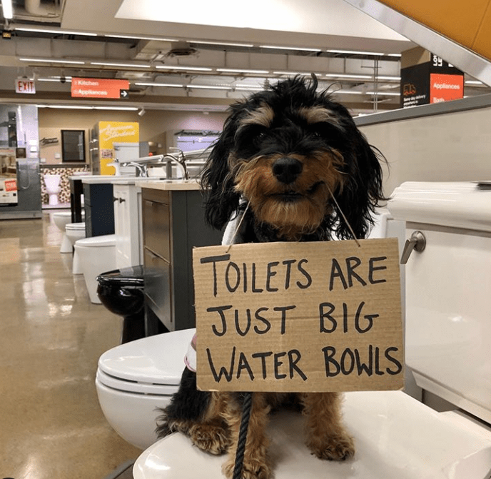 Dog - Kuhan Appliances EXIT TOILETS ARE JUST BIG WATER BOWLS