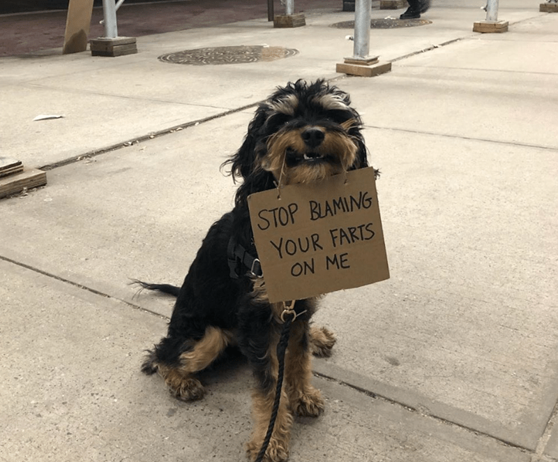 Dog - STOP BLAMING YOUR FARTS ON ME