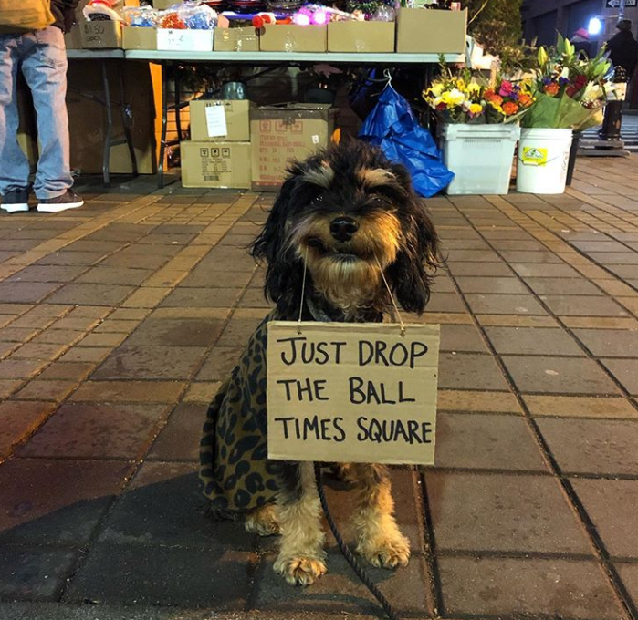Dog - $150 JUST DROP THE BALL TIMES SQUARE