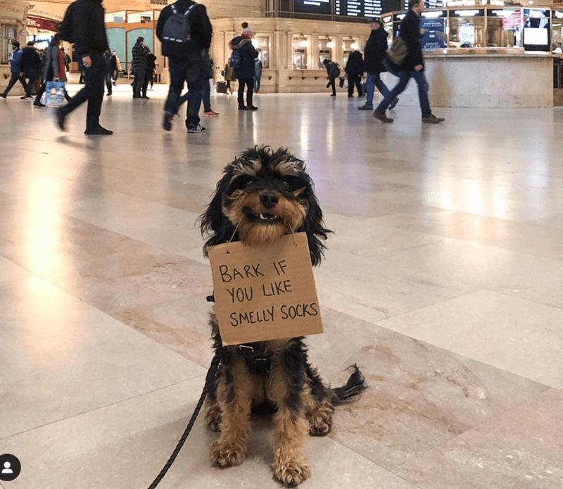 Dog - ANDEIRTE RA KIR BARK IF YOU LIKE SMELLY SOCKS