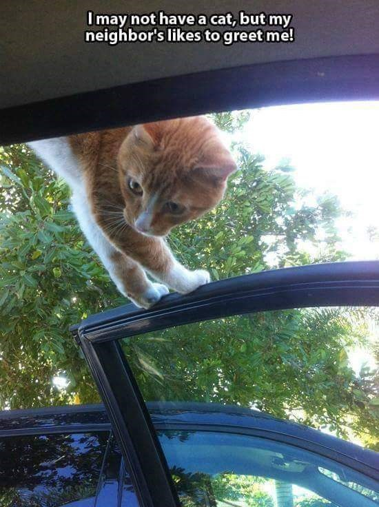 Vehicle door - I may not have a cat, but my neighbor's likes to greet me!