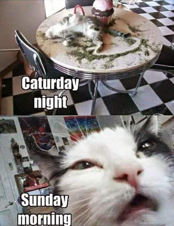 Cat - Caturday night Sunday morning