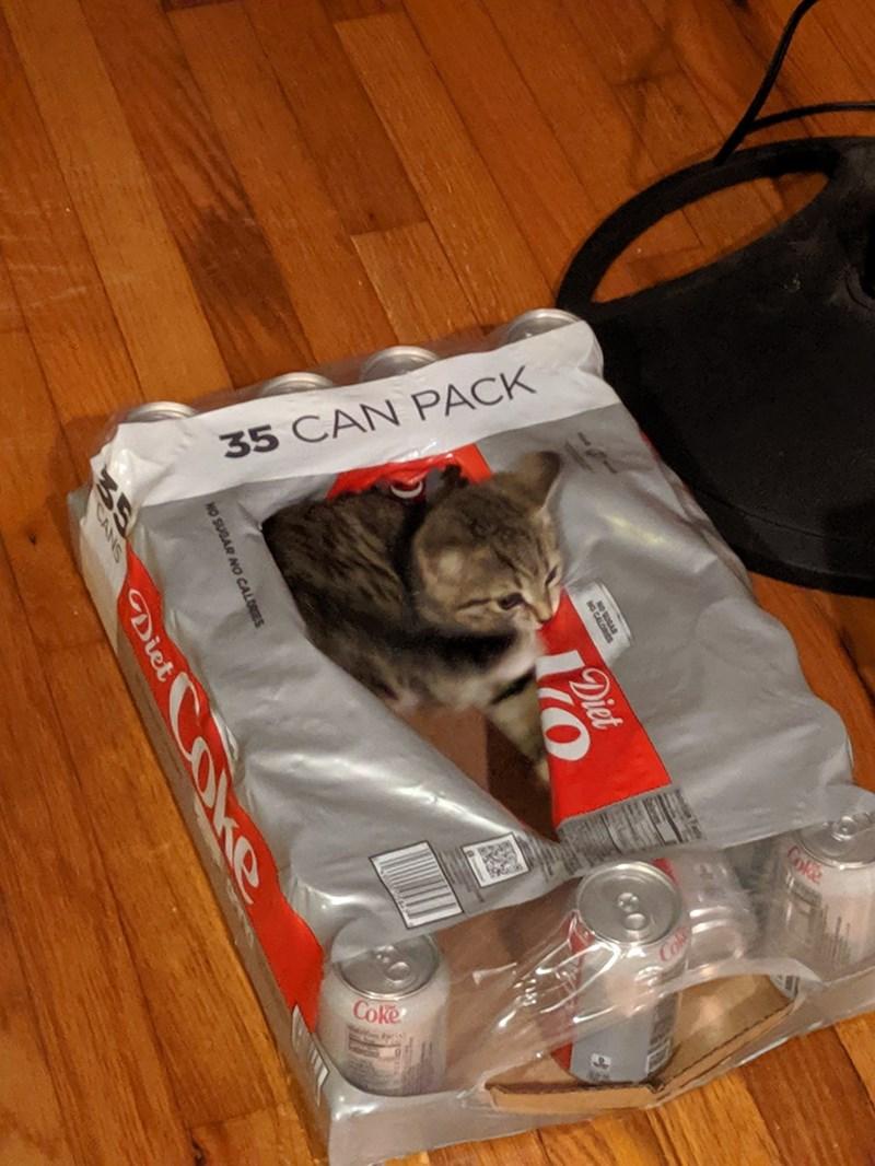 Cat - 35 CAN PACK Coke NG CALORES Diet NO SUGAR NO CALORES Diet O ke CANS