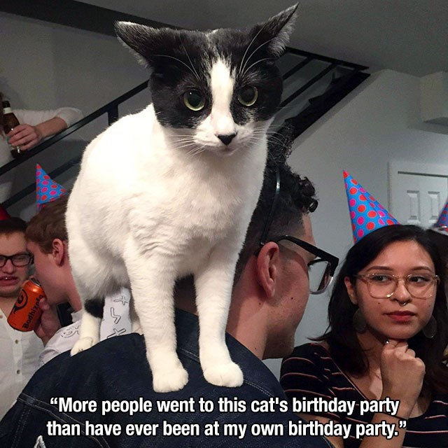 "Cat - ""More people went to this cat's birthday party than have ever been at my own birthday party."""