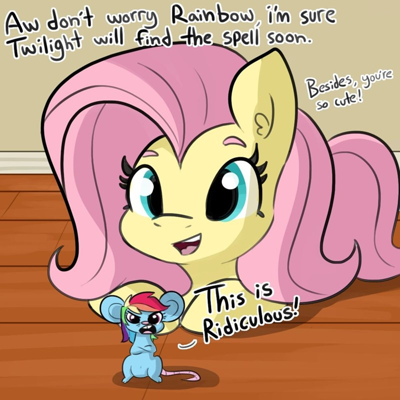 tj pones fluttershy rainbow dash - 9418395392