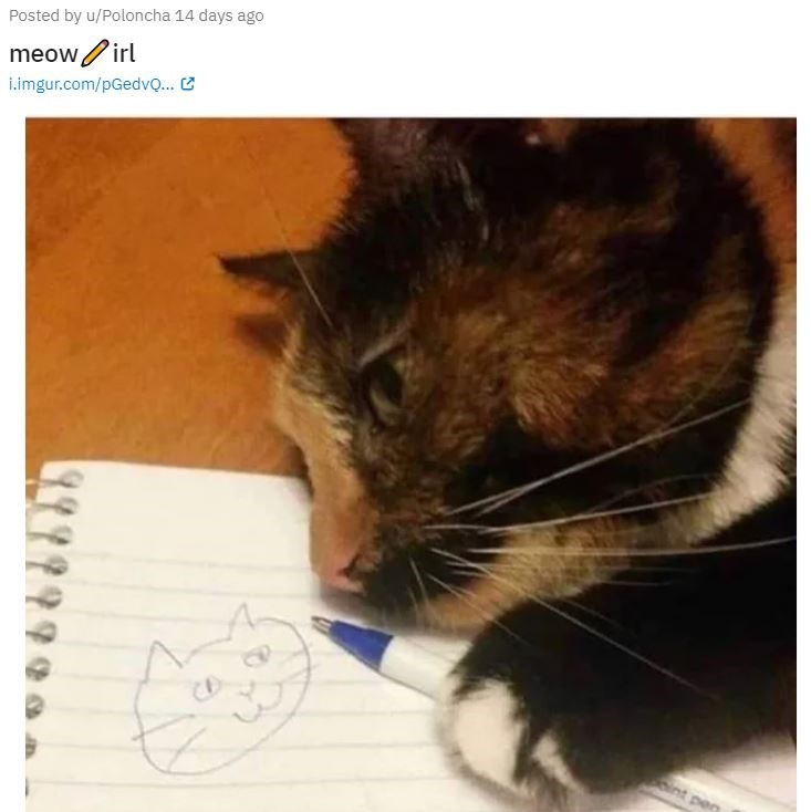 Cat - Posted by u/Poloncha 14 days ago meow/irl i.imgur.com/pGedvQ... C CD