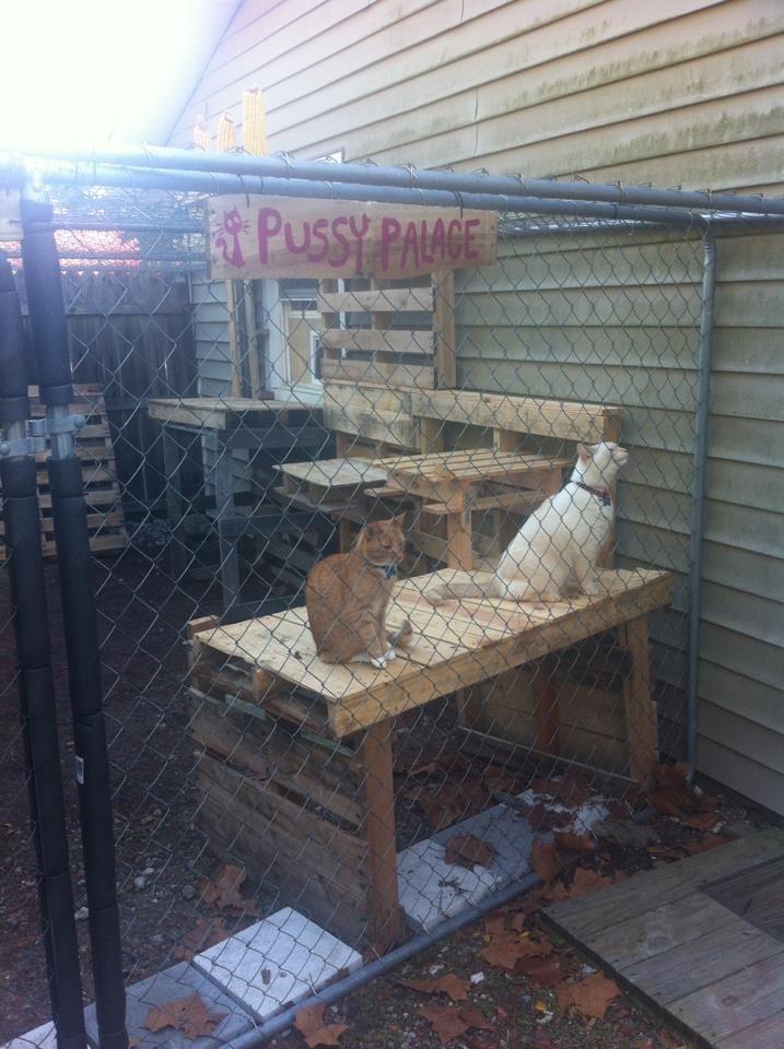 Wood - Pussy PANGE