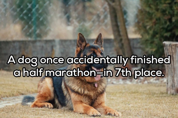 Dog - A dog once accidentally finished a half marathon-in 7th place.