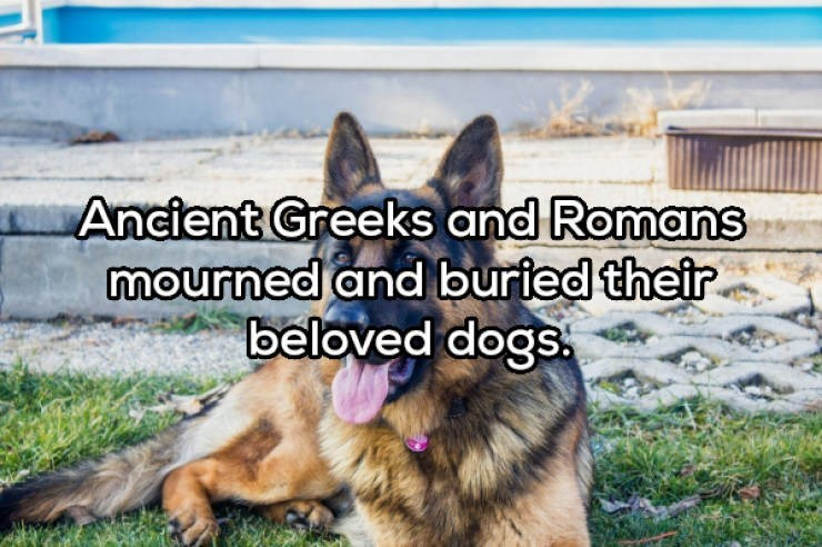 Mammal - Ancient Greeks and Romans mourned and buried their beloved dogs.