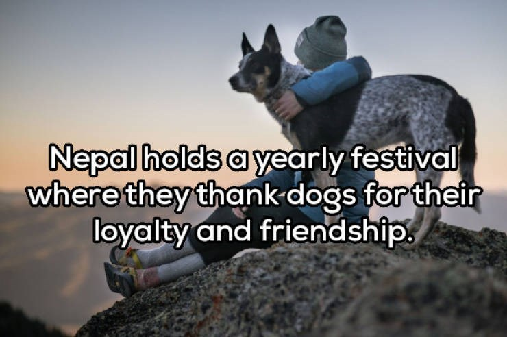 Canidae - Nepal holds a yearly festival where they thank-dogs for their loyalty and friendship.