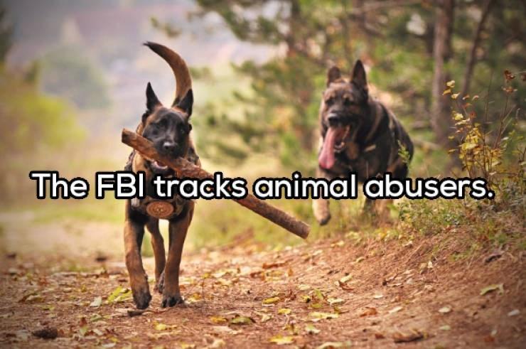 Dog - The FBI tracks animal abusers.