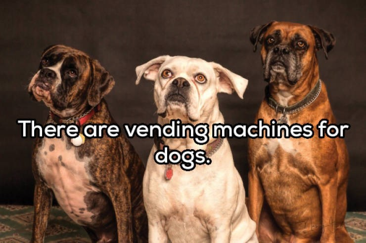Dog - There are vending machines for dogs.