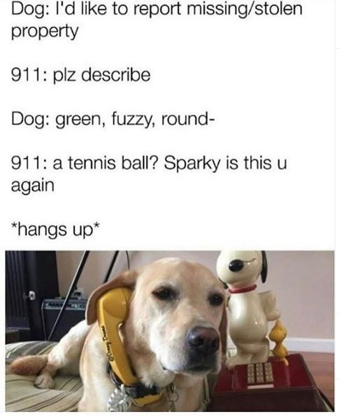 Dog - Dog: l'd like to report missing/stolen property 911: plz describe Dog: green, fuzzy, round- 911: a tennis ball? Sparky is this u again *hangs up* EOUOE