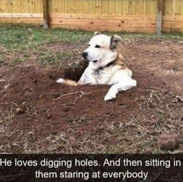 Mammal - He loves digging holes. And then sitting in them staring at everybody