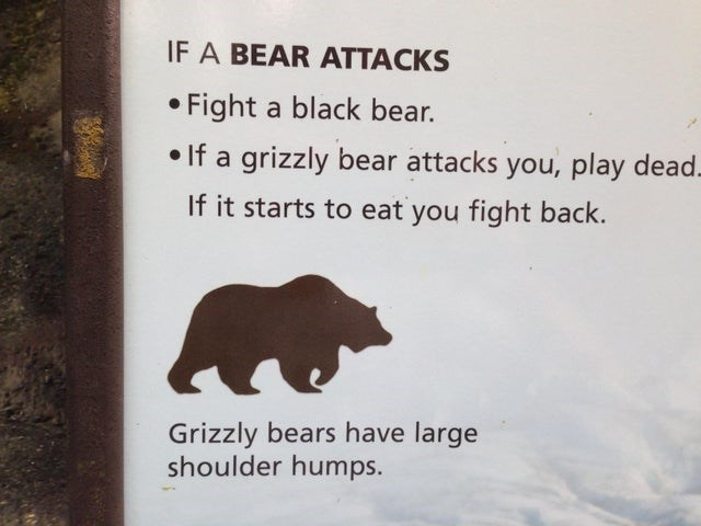 Bear - IF A BEAR ATTACKS • Fight a black bear. • If a grizzly bear attacks you, play dead. If it starts to eat you fight back. Grizzly bears have large shoulder humps.
