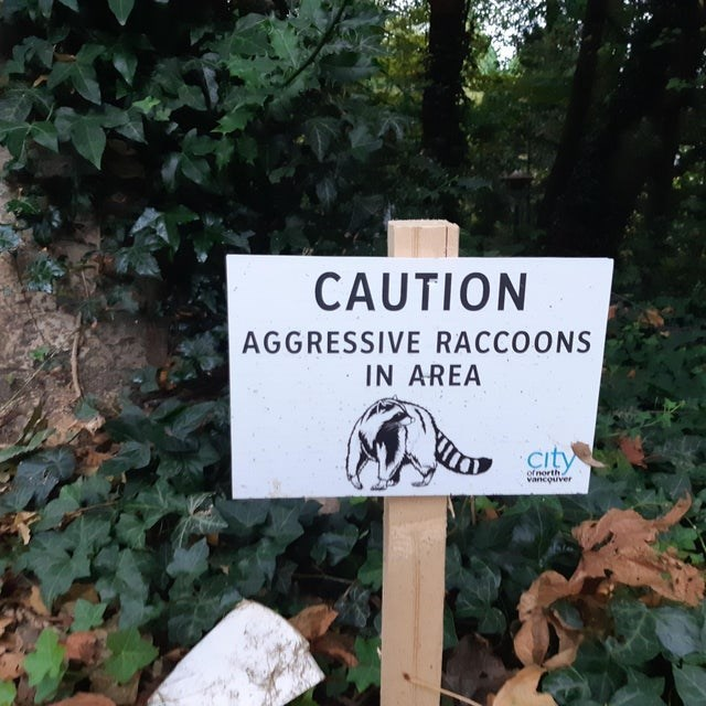 Nature reserve - CAUTION AGGRESSIVE RACCOONS IN AREA city of north vancouver