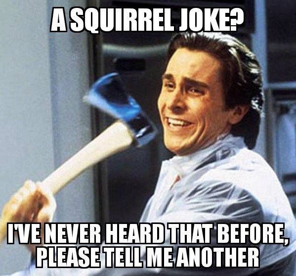 Photo caption - A SQUIRREL JOKE? IVE NEVER HEARDTHAT BEFORE, PLEASE TELL ME ANOTHER