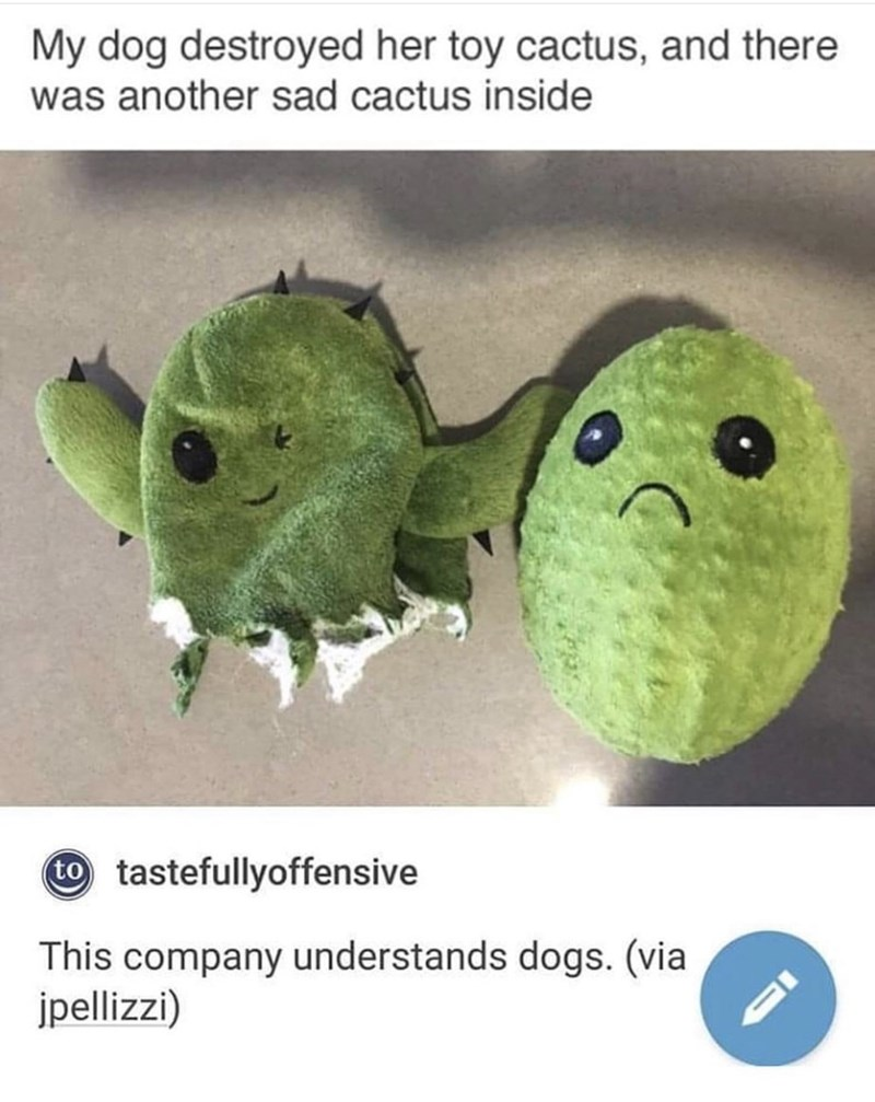 Organism - My dog destroyed her toy cactus, and there was another sad cactus inside tastefullyoffensive This company understands dogs. (via jpellizzi)