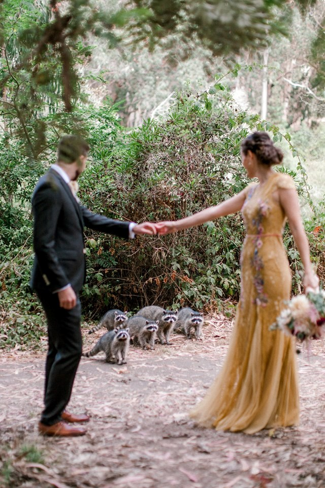 raccoons crash wedding, funny wedding photos