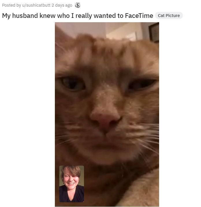 Cat - Posted by u/sushicatbutt 2 days ago S My husband knew who I really wanted to FaceTime Cat Picture