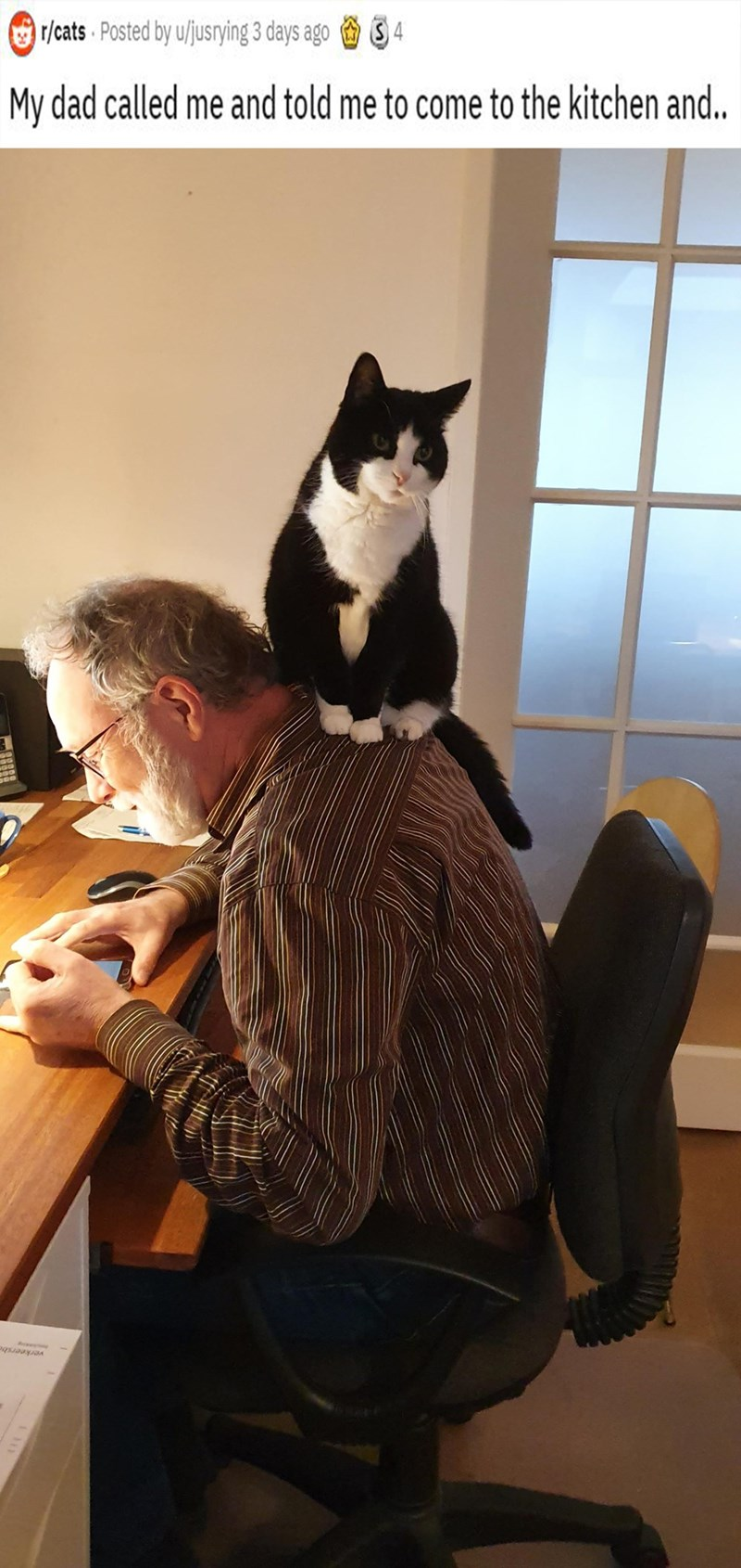 Cat - O r/cats Posted by u/jusrying 3 days ago S4 My dad called me and told me to come to the kitchen and.. verkeersbe